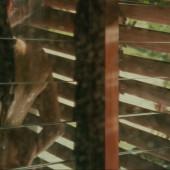 Mila Kunis nackt scene